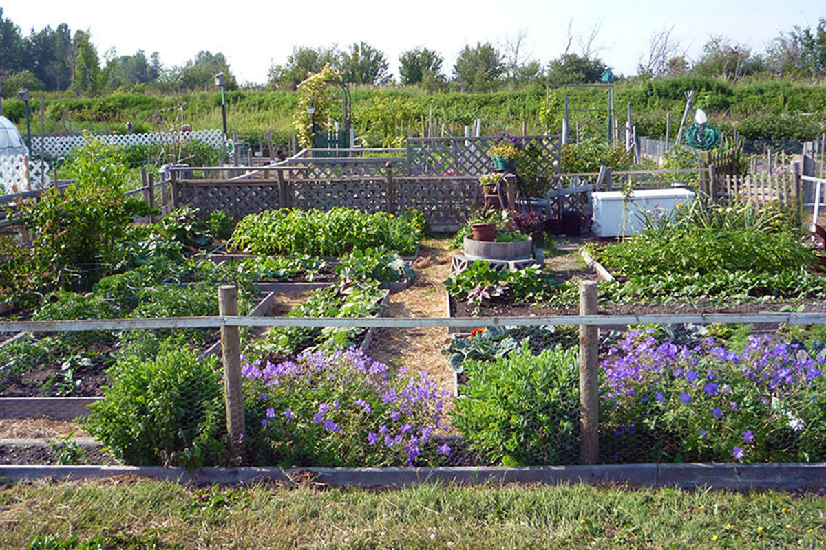 learn how to start a community garden at surrey workshop - How To Start A Community Garden