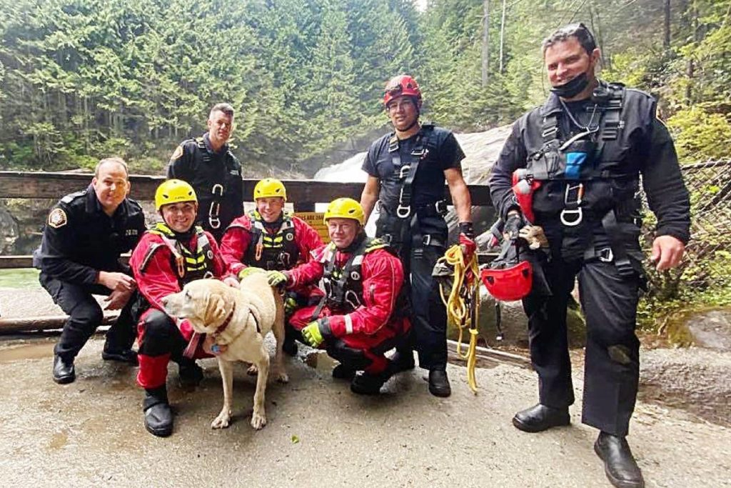 VIDEO: Dog survives plunge over Gold Creek Lower Falls in Maple Ridge - North Delta Reporter